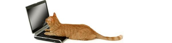 Kat spiser online